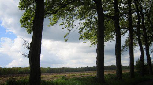 De Riet – Kringloop in Almelo